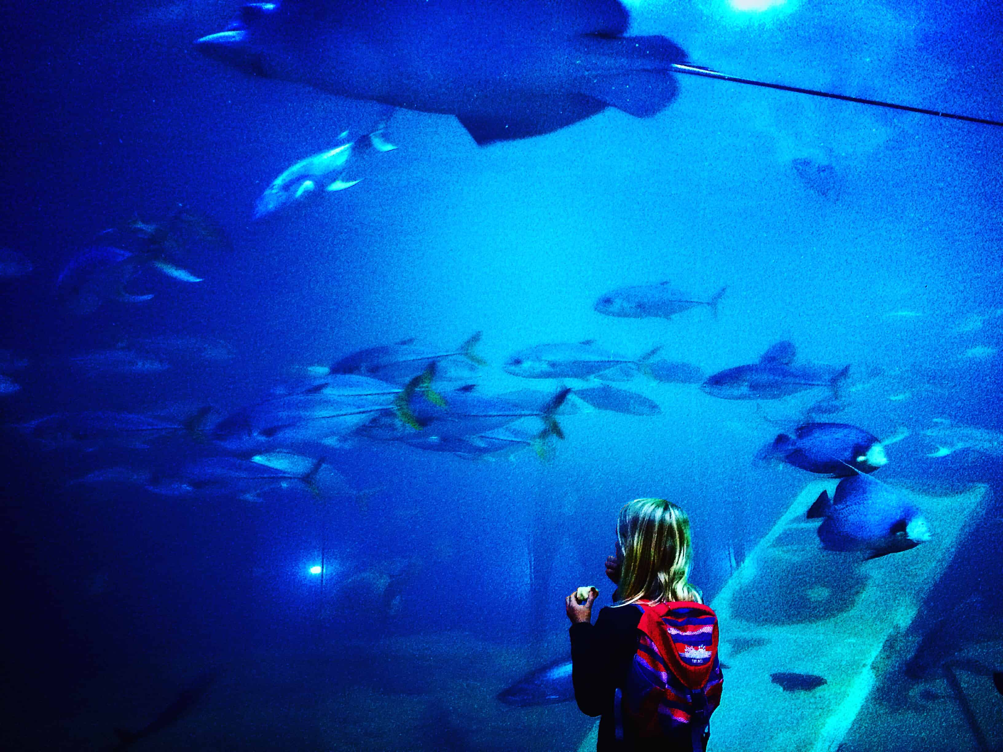 5 Reasons To Visit The National Marine Aquarium In Plymouth