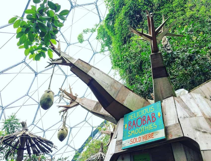 Try a baobab cocktail at the eden project