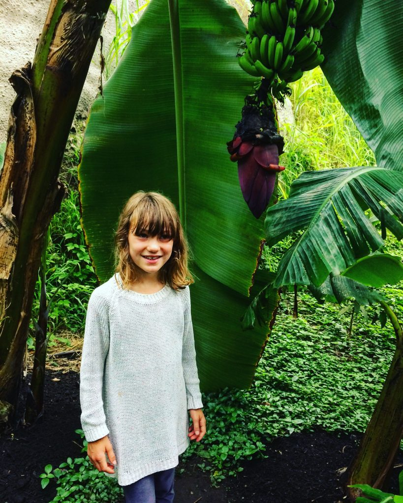 Visiting the Eden Project