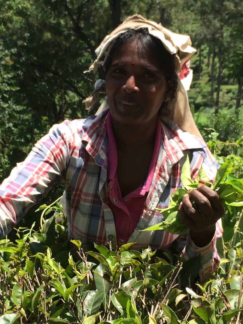 The best things to do in Ella Sri Lanka is visit a tea factory