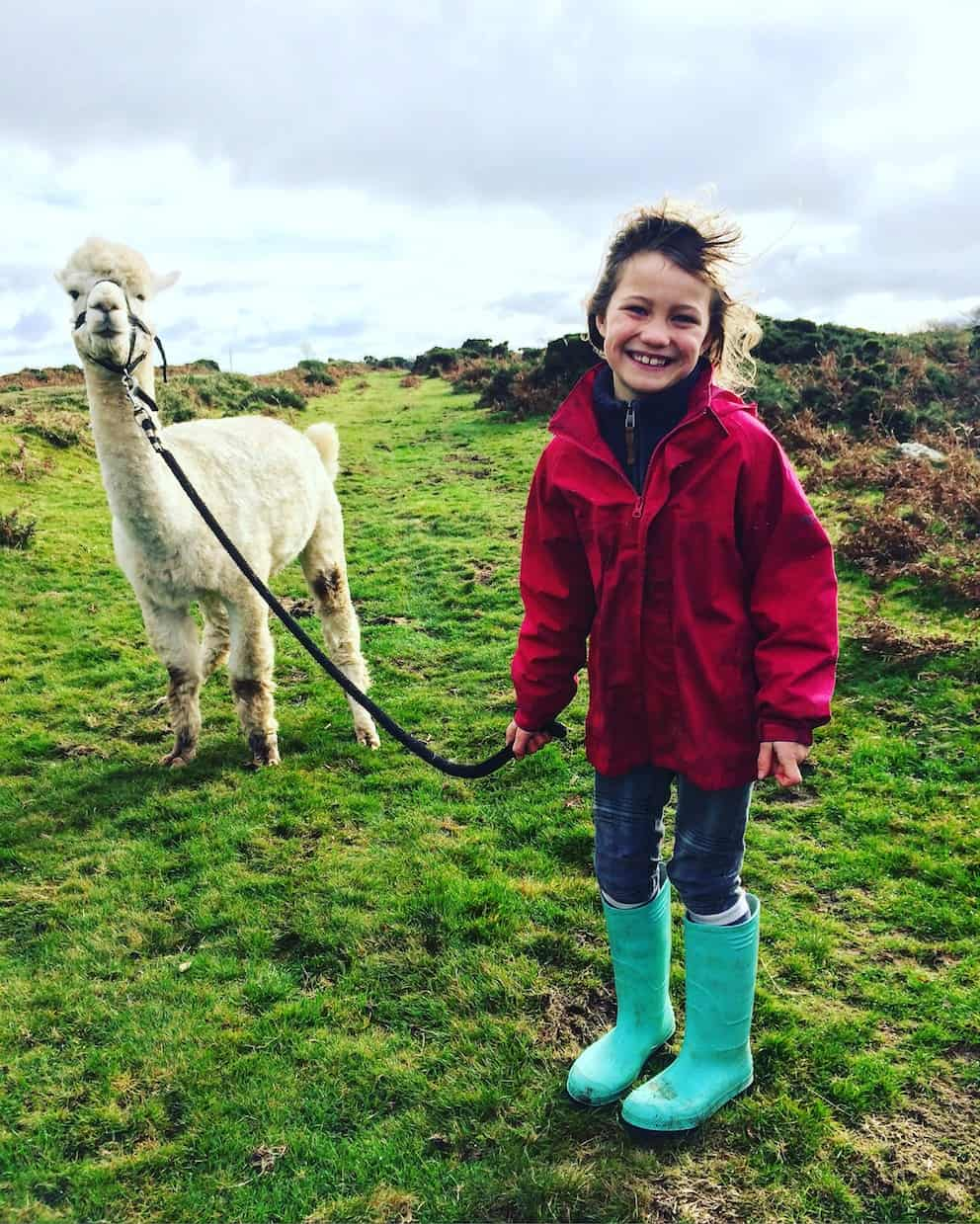 little girl smiling with an alpaca on a lead