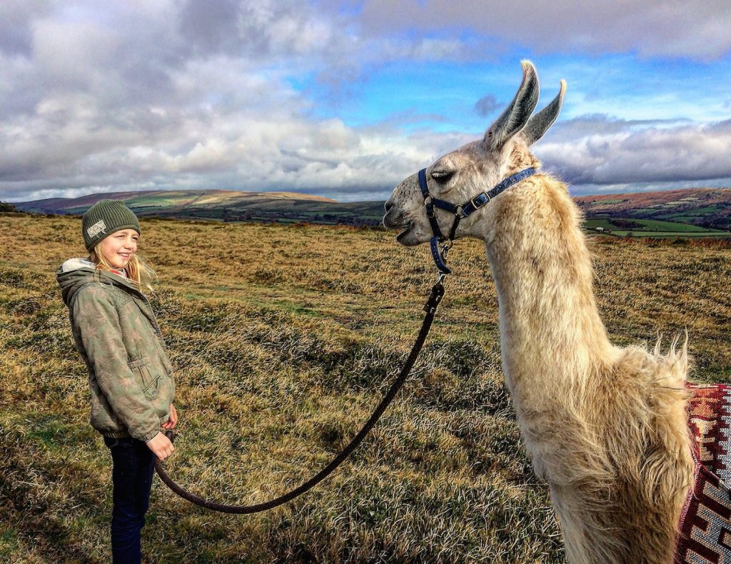 Dartmoor walks with llamas