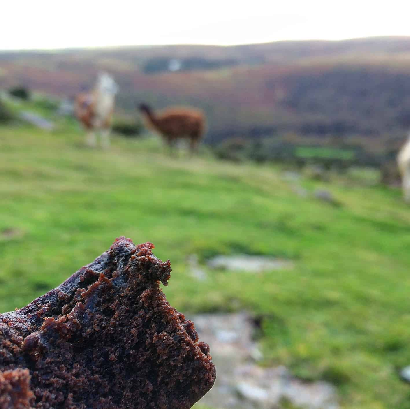 homemade brownies - perfect snack on Dartmoor