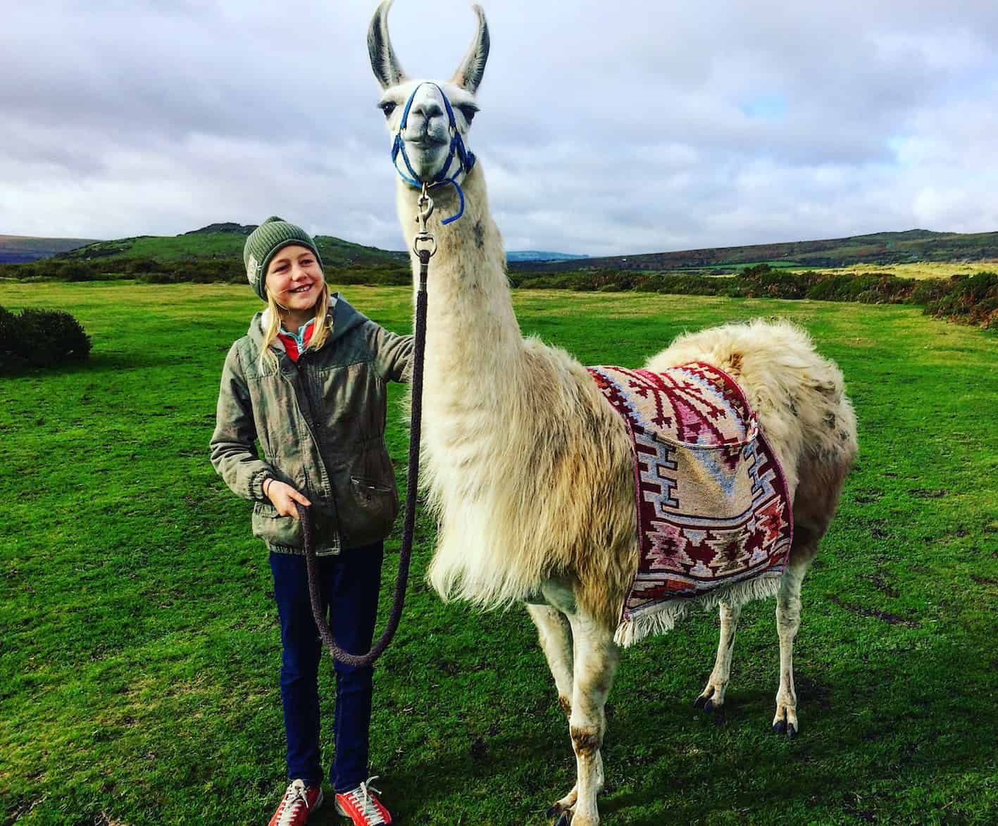 stroking a llama on dartmoor