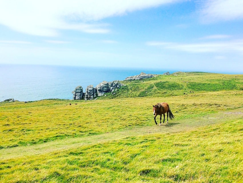 wild pony lundy island north devon