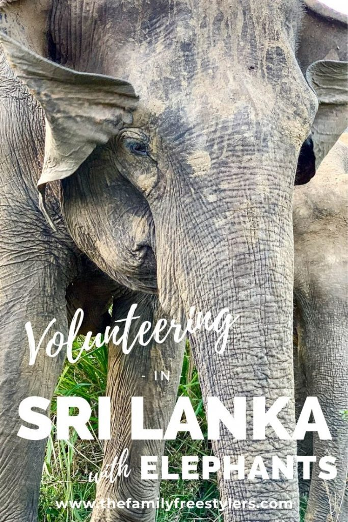 volunteering in Sri Lanka with elephants